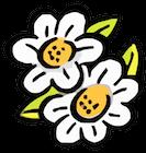 Gänseblümchen-Gaiberg